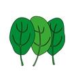 Cartoon of green fresh spinach vector image vector image
