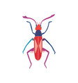 cute colorful beetle insect top view vector image vector image