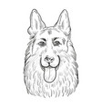 german shepherd dog face isolated on white vector image vector image