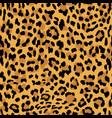 seamless pattern leopard skin texture vector image