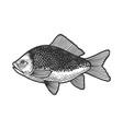 fish with human eye sketch vector image vector image