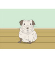guinea pig sitting in a room vector image vector image