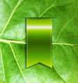 Leaf With Ribbon vector image vector image