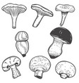 set of hand drawn mushrooms isolated on white vector image