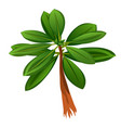 tropical tree with green leaves isolated on white vector image vector image