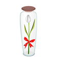 White Tulip with Red Ribbon in Glass Bottle vector image vector image