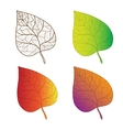 Collection colorful autumn leaves isolated vector image