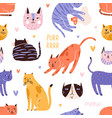 backdrop with cute funny cat head muzzle face vector image vector image