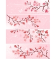 Cherry blossom banner vector image