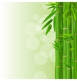 Colorful Stems and Bamboo Leaves Background vector image vector image