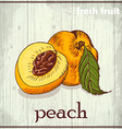 Hand drawing of peach Fresh fruit sketch vector image vector image