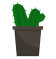 cactus green plant in pot with thorns houseplant vector image