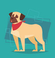 dog wear winter scarf new year and christmas 2018 vector image