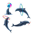 dolphin circus realistic icon set vector image