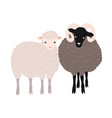 pair of sheep and ram standing together adorable vector image