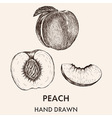 Sketch of whole peach half and segment Hand drawn vector image vector image