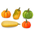 autumn colorful pumpkins isolated fall vector image