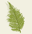 fern on biedge background vector image vector image