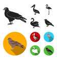 kite pelican flamingo swan birds set vector image vector image