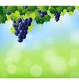 vine summer top vector image