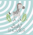 baby shower card with cute zebra vector image vector image