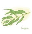 eucalyptus branch hand drawn vector image vector image