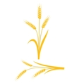 Yellow wheat ears on a white background vector image vector image