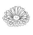 black and white daisy flower isolated vector image vector image