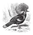 crown pigeon vintage vector image vector image
