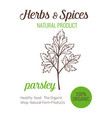 hand drawn parsley vector image