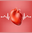 human heart and heart beat on ekg isolated on a vector image vector image