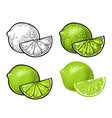 lime slice and whole color vintage vector image vector image