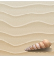 Marine background with seashell on sand vector image