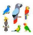 parrots birds breed species animal nature tropical vector image vector image