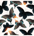 pattern with high detailed black butterfly vector image vector image