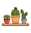 pots with desert plants in shelf vector image