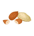 whole almond nut and half split isolated on white vector image vector image