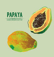 digital detailed color papaya hand drawn vector image vector image