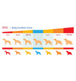 dog body condition score vector image vector image
