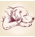 dog hand drawn llustration realistic sketch vector image