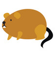 fat mouse on white background vector image vector image