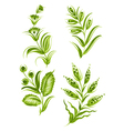 flower green elements vector image