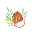 hand drawn watercolor painting of coconut with vector image