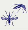 Mosquito vector image vector image