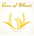 Wheat ears or rice icon vector image vector image