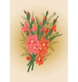 Bouquet of pink and red gladioluses vector image vector image