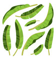 cartoon tropical banana palm leaves vector image