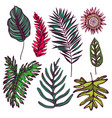 collection of hand drawn tropical leaves vector image