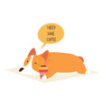 funny sleepy corgi dog hugging a cup coffee vector image