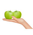 hand with apples vector image